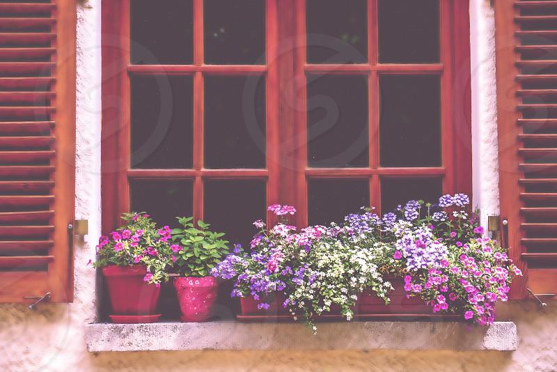 window with pretty flower pots photo