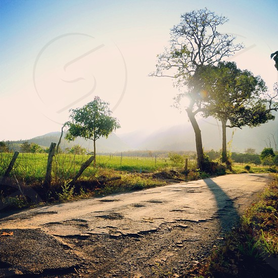 sun shining through deciduous trees by broken road and green fields photo
