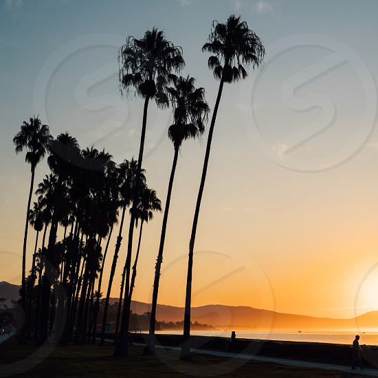 silhouette of palm trees and people walking on seaside under blue sky during sunset photo