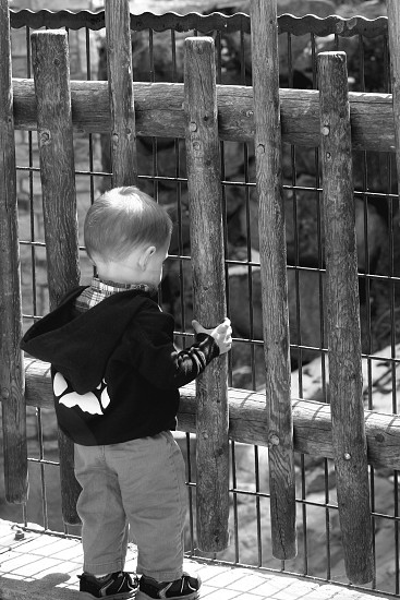 Colorado. Child at the zoo. photo