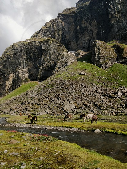 Horses drinking water by a stream in the mountains photo
