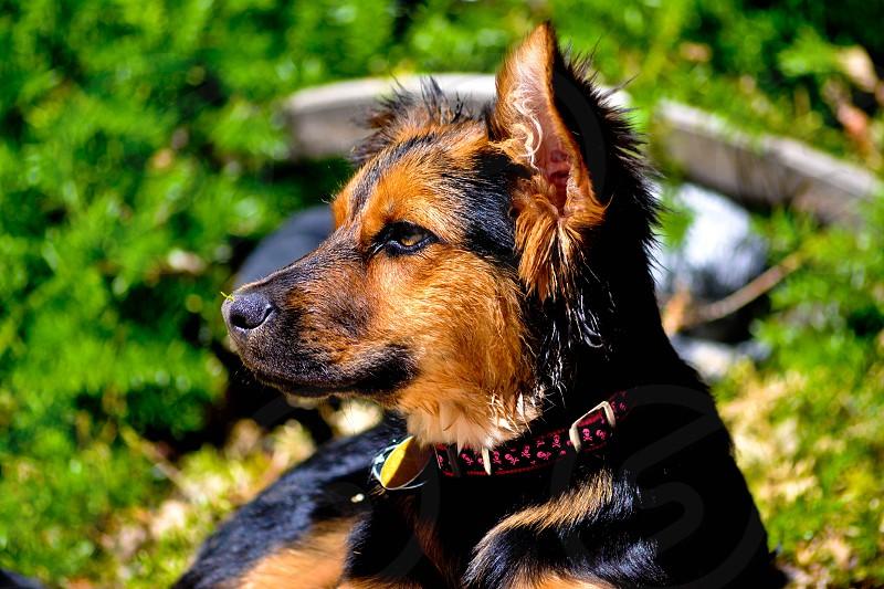 Pets outdoors photo