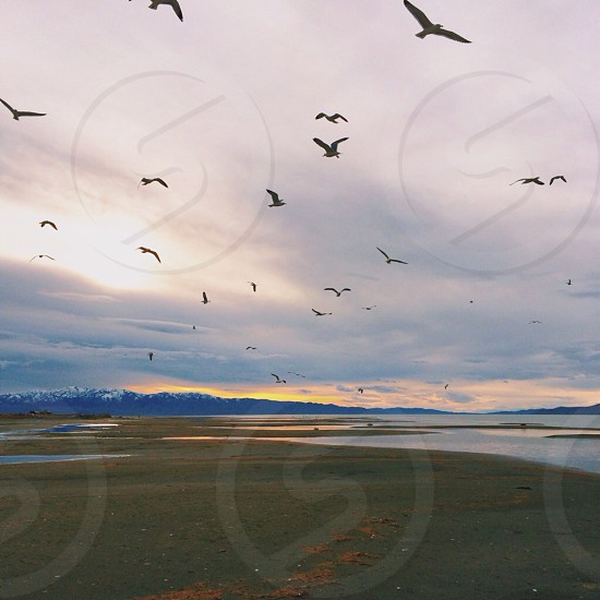birds flying by the shore photo