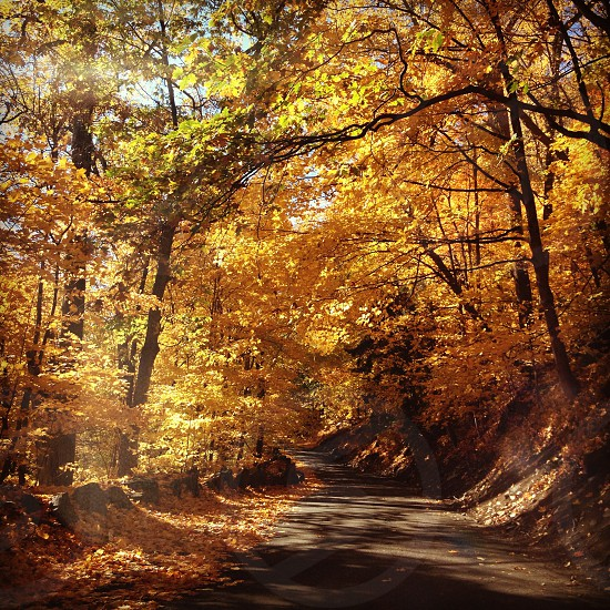 Fall. Under the George Washington Bridge New Jersey.  photo