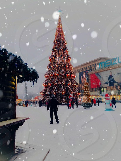 winter. photo