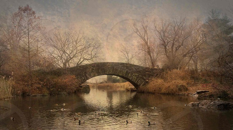 Central Park in Mist photo