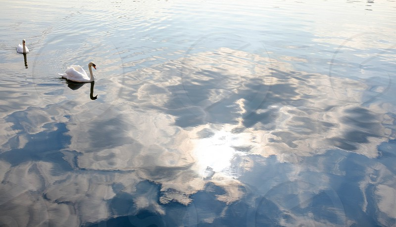 A pair of swans on a reflective lake with sunshine and clouds photo