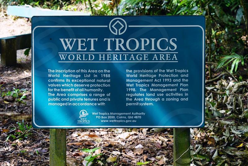 Daintree Rainforest - Cairns Queensland Australia photo
