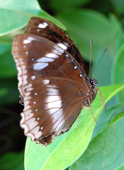 brown and white butterfly photo