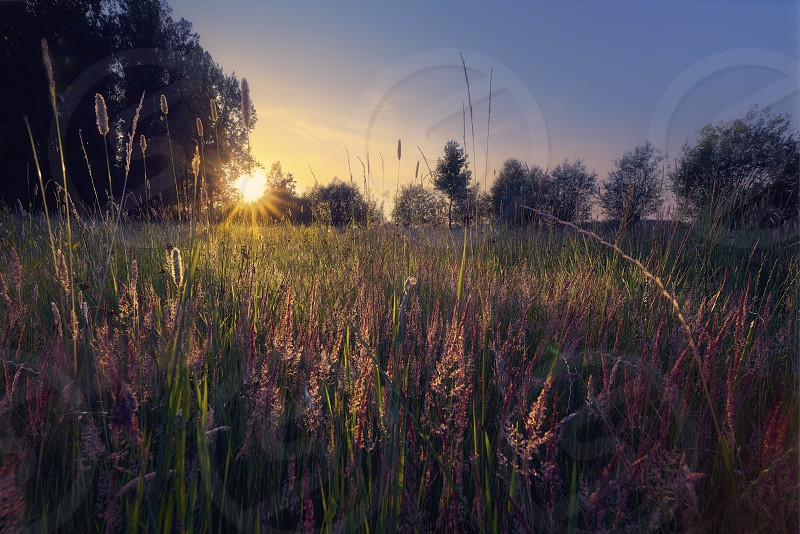 sunset on flowers in countryside photo