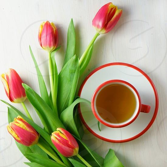 Tulips red cup tea overhead light photo