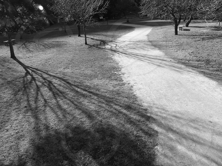 panoramic view of the pathway in the park photo