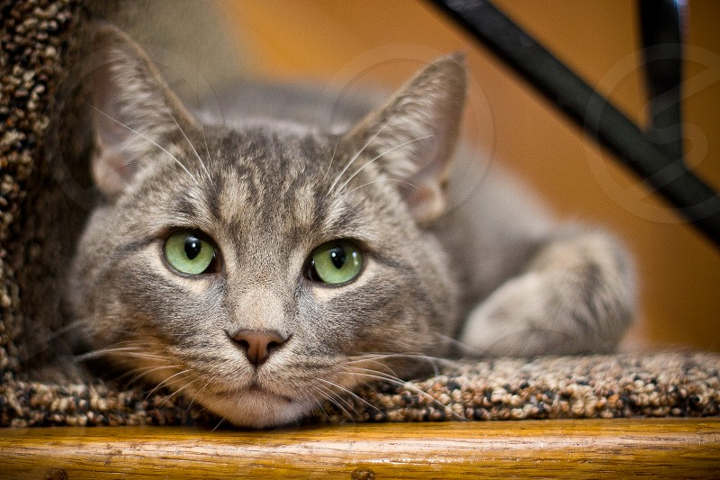 shallow focus photography of gray cat photo