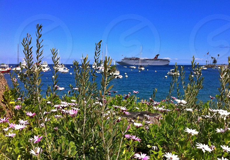 Catalina Island and Carnival Paradise photo