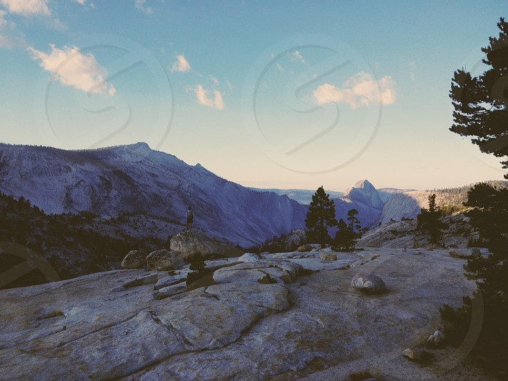 pine trees near gray mountain photo