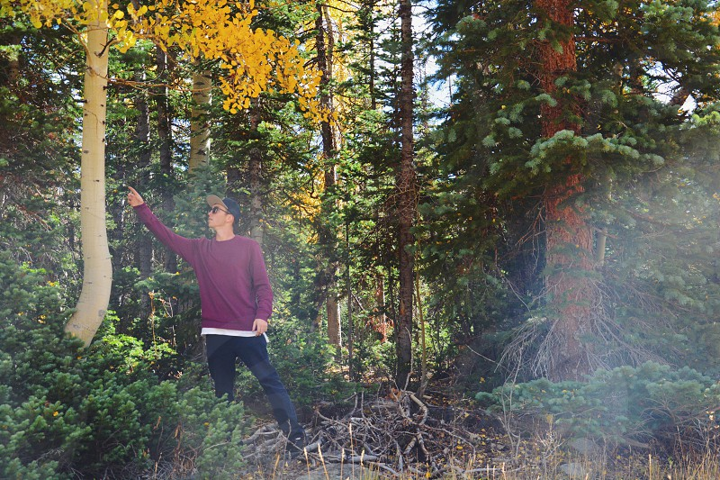 man standing in the middle of forest pointing at tree photo
