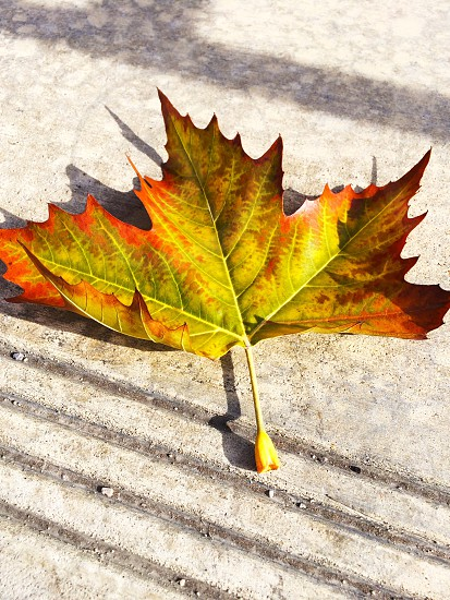 Leaf leaves green yellow fall autumn concrete sidewalk fallen leaves photo