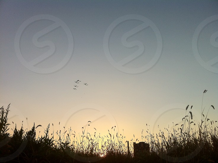 flying geese photo