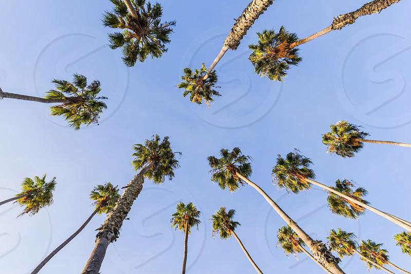 palm tree california sky photo