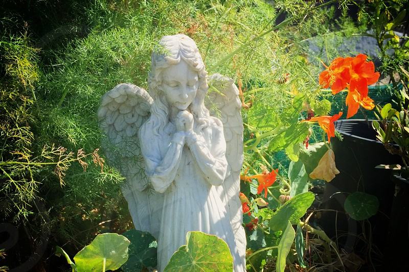 angel statue watching over an organic garden photo