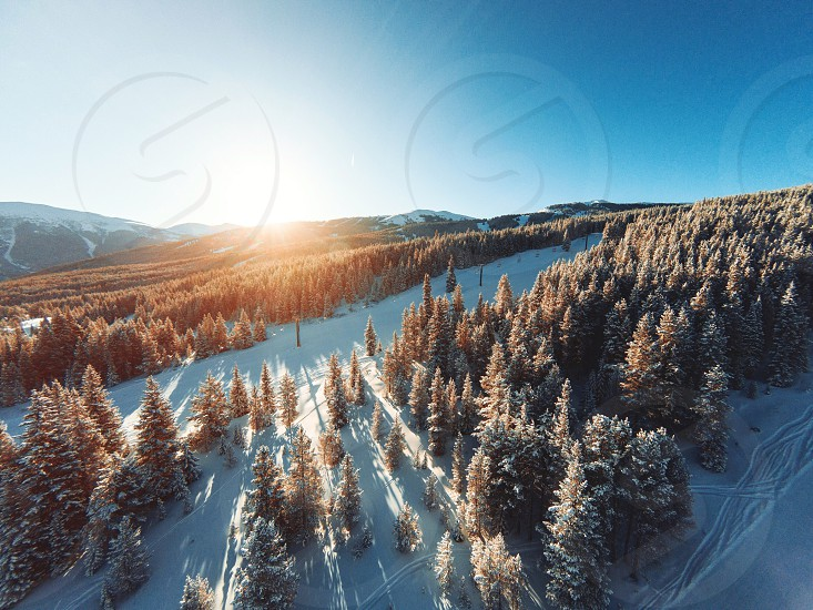 Colorado winter snow trees photo