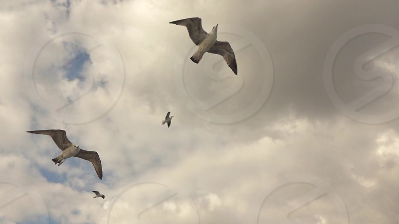 Close up flying seagull birds on a background cloudy sunset sky in summer. Panoramic slow motion Full HD video 240fps 1080p. photo