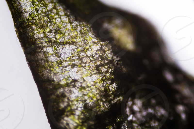 Pickled cucumber under the microscope. photo