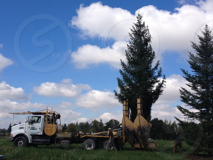 Tree spade moving a large Norway spruce photo