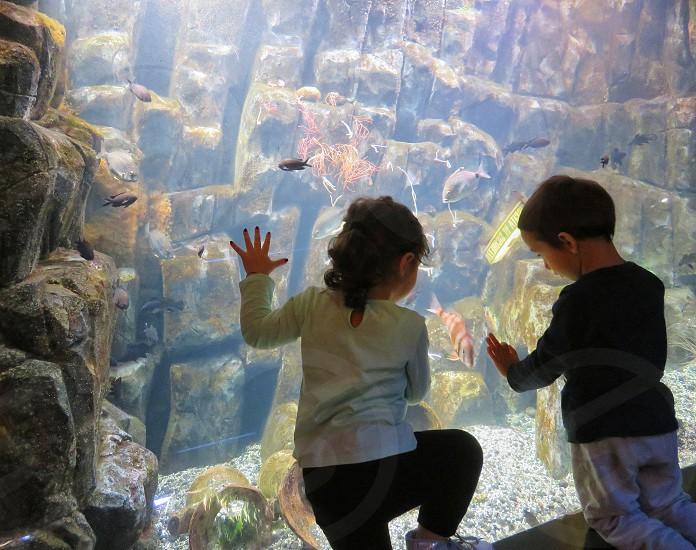 baby friendship in the aquarium photo
