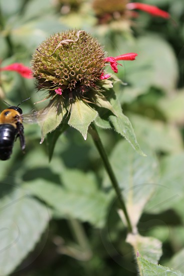 Bee Bumble bee Carpenter bee Journey Perspective Mid-flight Insect photo