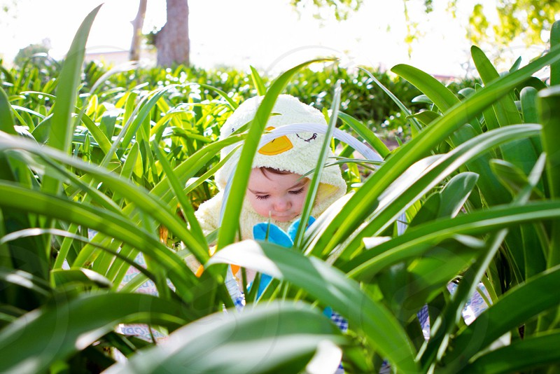 toddler wearing blue and yellow hoodie jacket in the middle of green leaf garden during daytime photo