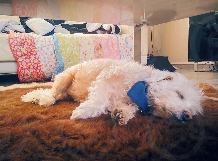 My dog again! Dreamworld. photo