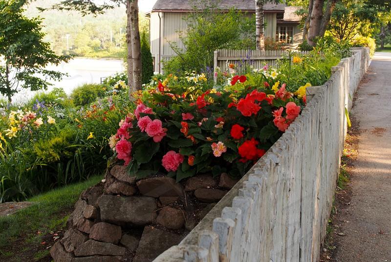 Fence. Flowers. Acadia. photo