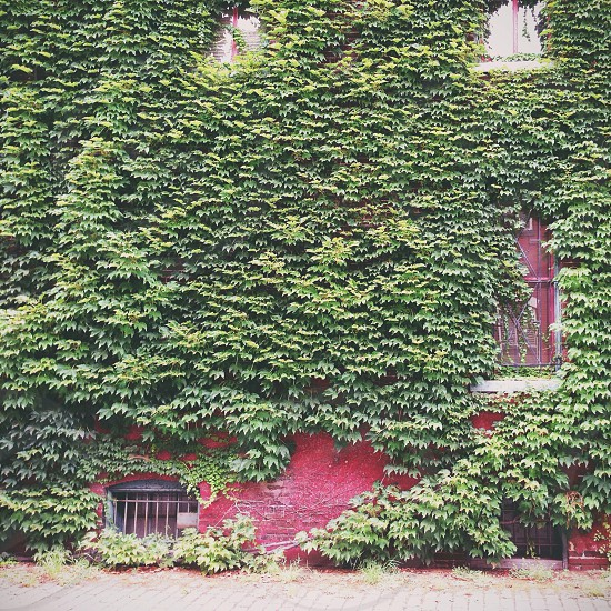 red brick leaf covered house photo