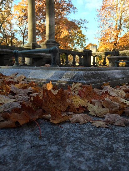 A tomb viewed at ground level with fallen leaves photo