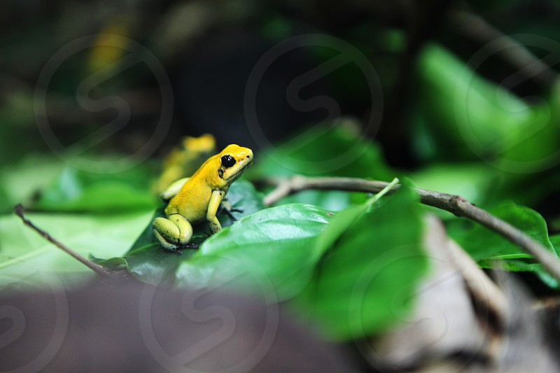 yellow frog on green leaf photo