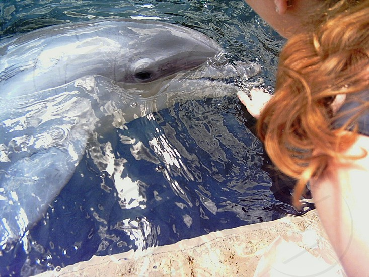 Close encounter with a friendly dolphin photo