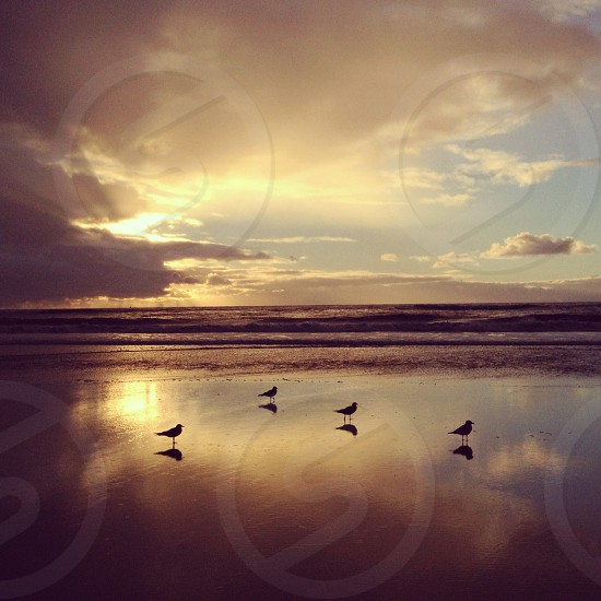 seaside view photography photo