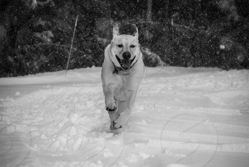 animals dogs black and white winter photo