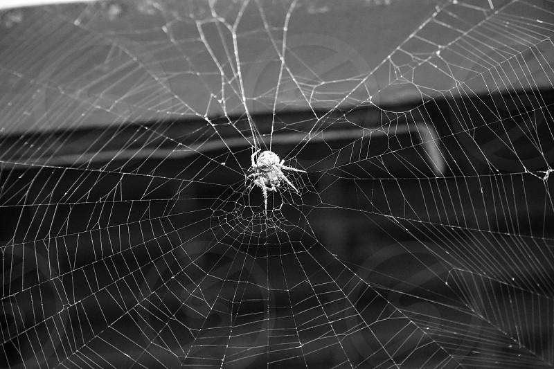 Spider close up web arachnid  photo