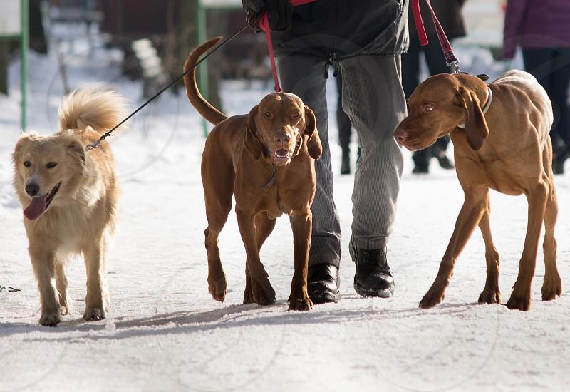dog leech winter group owner snow walk photo