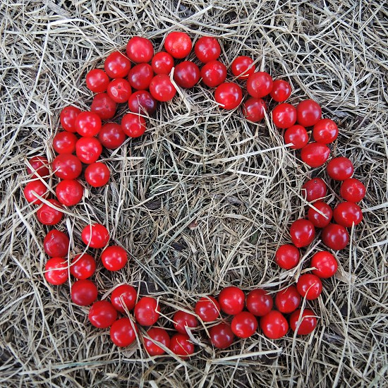 red berry fruit photo