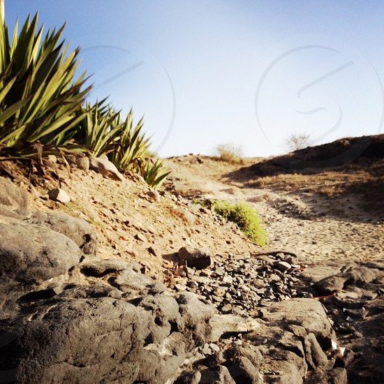 agave beach nature landscape photo