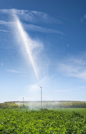 Watering sprinklers on the field. Green plants and blue sky photo