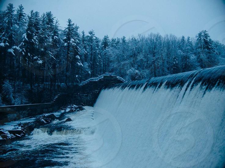 pine trees near the dam photo