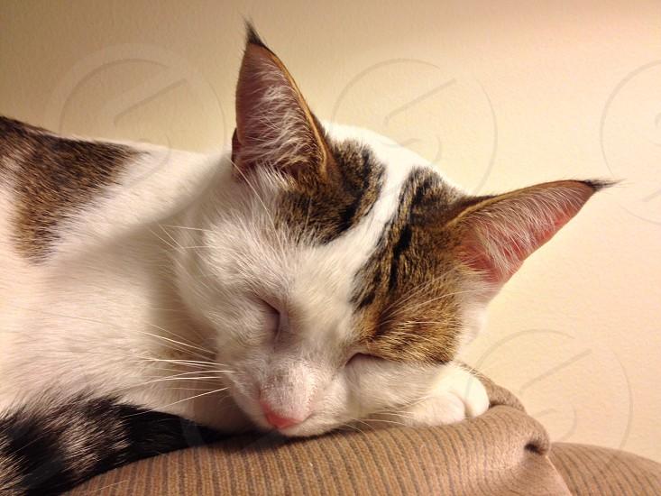 Jasper takes a nap  photo