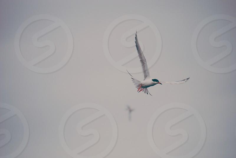 Bird Sky Nature  photo