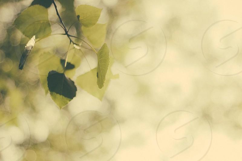 green leaves macro shot photo