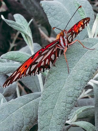 Butterfly in San Diego garden photo