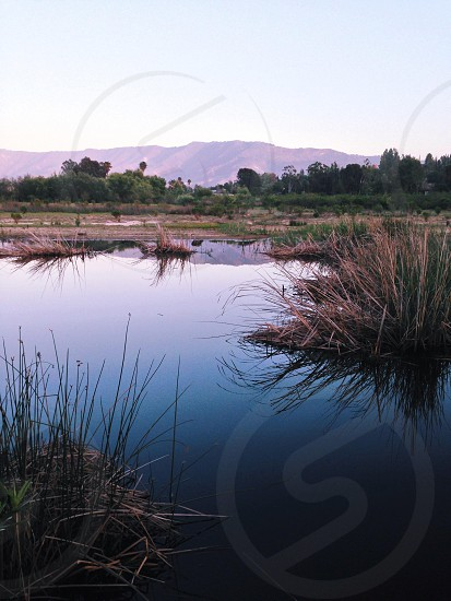 brown grass in lake under clear sky photo